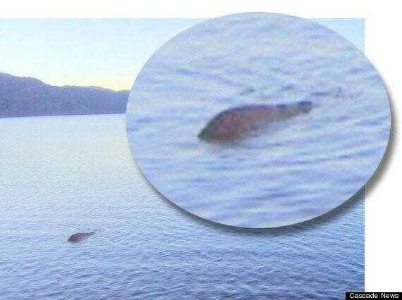 Loch Ness Monster? Skipper George Edwards Has 'Best Ever' Shot Of Elusive Nessie