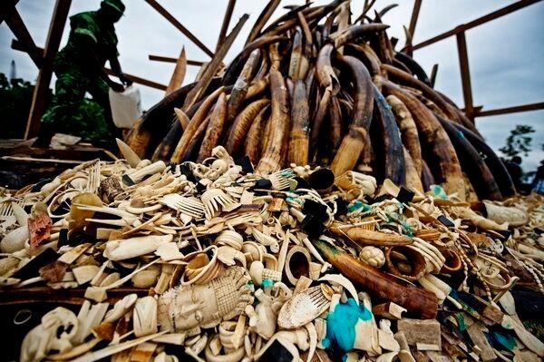 Up in Smoke: Gabon Burns Elephant