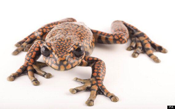 Frog Named After Charles Prince of
