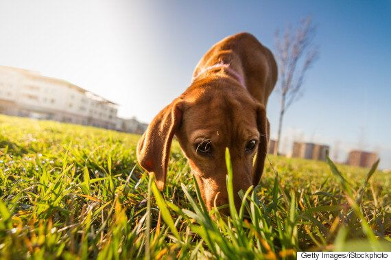 It's A Myth That Humans' Sense Of Smell Is Inferior To That Of Other Animals - Here's