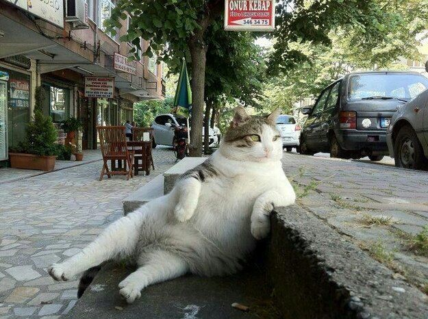 Chilled Out 'Lazy Cat' Goes Viral