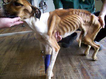 We Shouldn't Dismiss Pedigree Dog Health Problems as