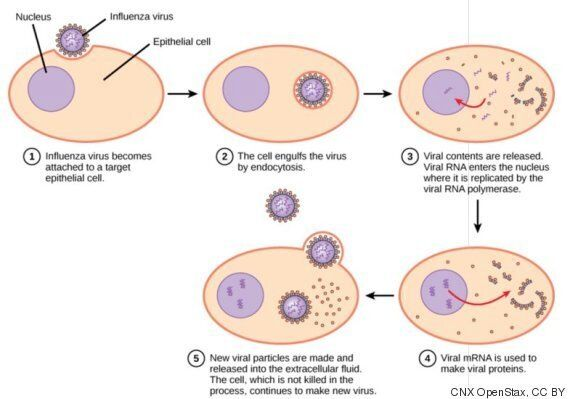 Are Viruses Alive? Giant Discovery Suggests They're More Like