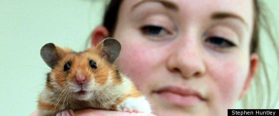 Hamster Pulled From Rubble Of Essex House Following