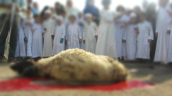 Animal Sacrifice: Celebrating Mercy With An Act Of
