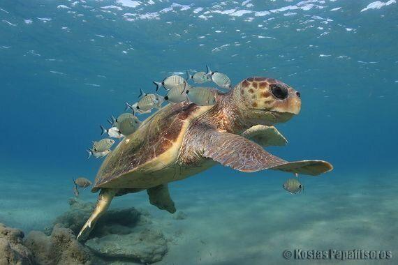 Life's A Beach So Save The Sea