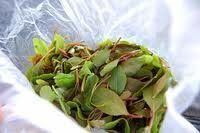 Khat Addiction and the Social Side Effects for