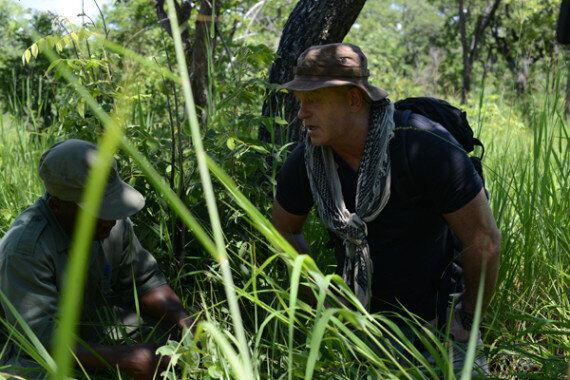 Investigating The Violent And Corrupt World Of Elephant