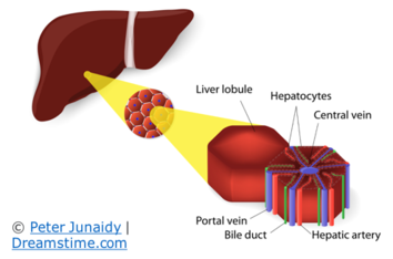 January Is 'Love Your Liver'