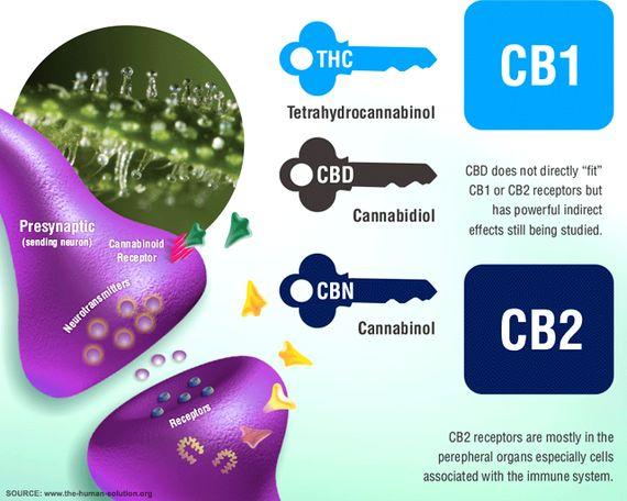 Fact (ish) CBD is a medicine