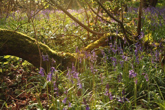 Respect Your Elders - Why Our Ancient Woods Deserve