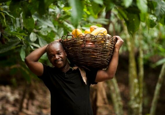 $400Million Cocoa Investment Aims To Tackle Poverty And Empower