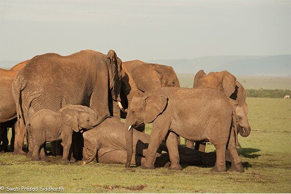 Why We March For Elephants And