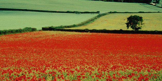 Conflict Through A New Lens: Will Social Media Stop The Somme From Ever Happening