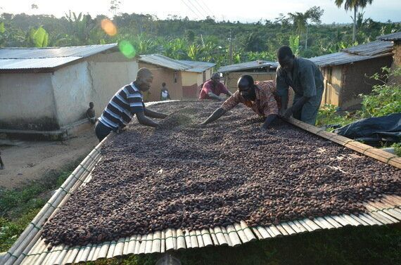 Setting A New Ambition For Sustainable Cocoa Farming - From Buyer To Accountable