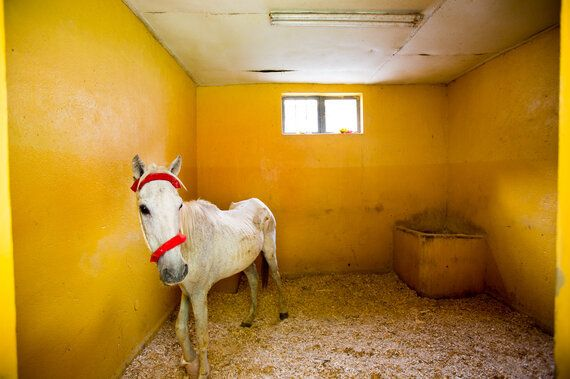 How China's Growing Appetite For African Donkey Hides Is Threatening Survival In Developing