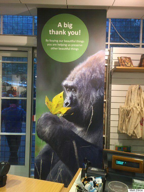 Zoopocalypse Now: How I Survived The Gorilla Escape At London
