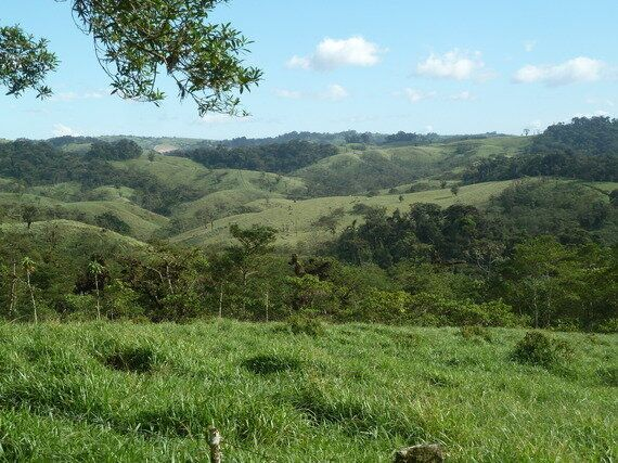 Soils, Forests, Food, Water And Climate: Time For Joined-Up