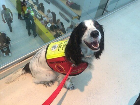 Assistance Dogs And Access Refusals - Why Isn't The Law Being