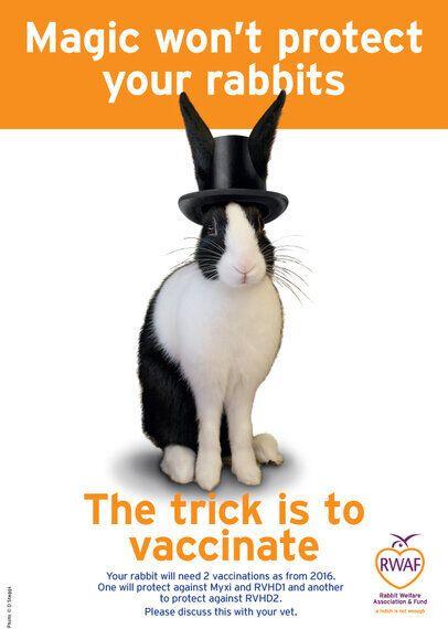 RVHD2: The UK's Newest Fatal Rabbit