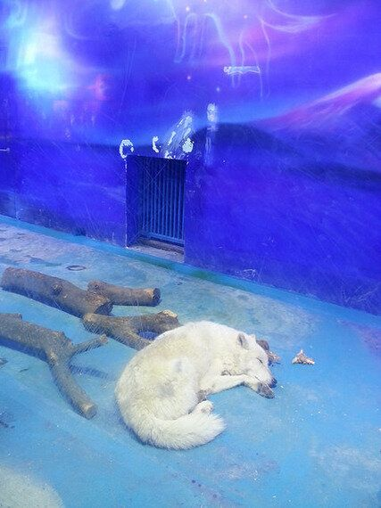 The Grandview Aquarium: One of Many Ocean Parks in