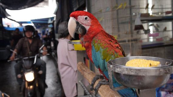 Exotic Pets - Consumers May Not Be Willing to Pay the