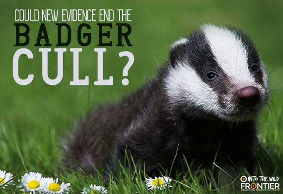 Could New Evidence End The Badger