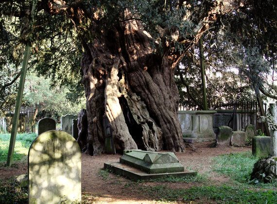 Tree Stories - The Living Library in Our