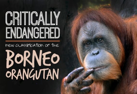 Critically Endangered: New Classification of the Borneo