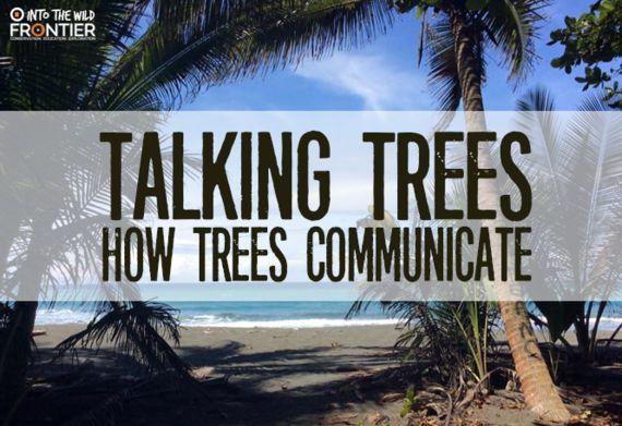 Talking Trees: How Trees