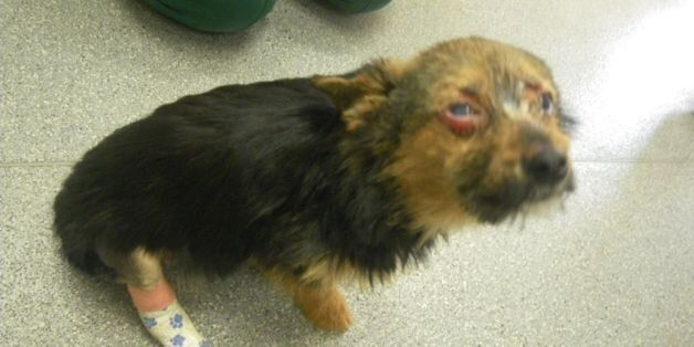 Why I'm Campaiging for the Government to Introduce an Animal Abuse Register in the