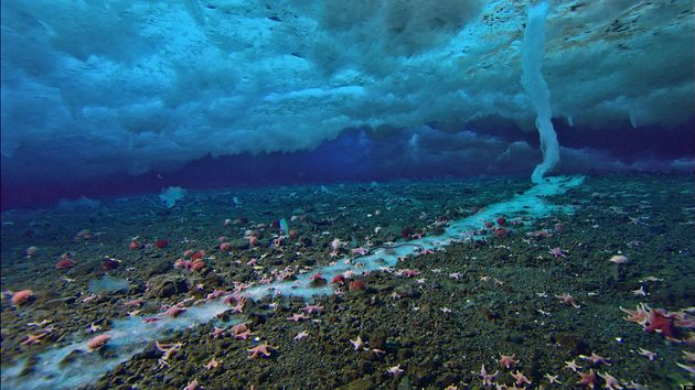 Frozen Planet's Brinicle: The Deadly Finger Of Ice That Kills All In Sight (Video And