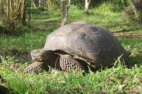 When Small Tortoises Signal