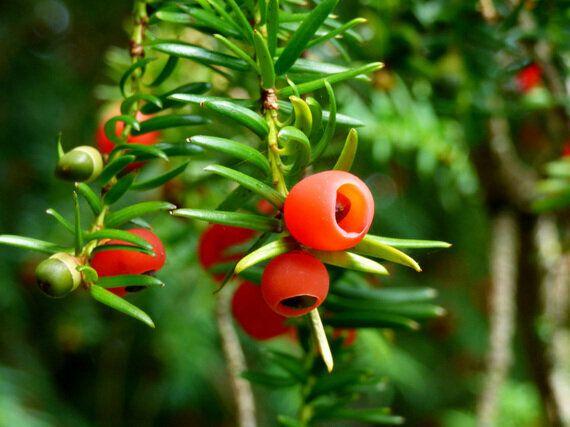 Five Deadliest Plants on