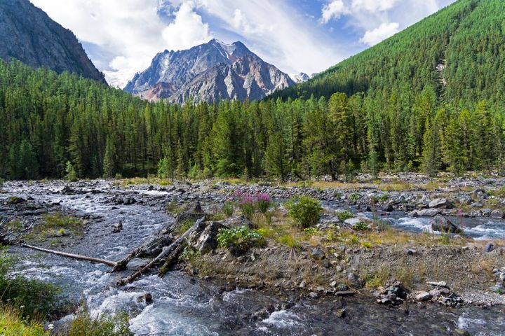 Altai Mountains in Siberia. The Shawla River above the estuary of the Yeshtykol River.