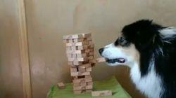 세상 숨멎게 만드는 강아지의 젠가