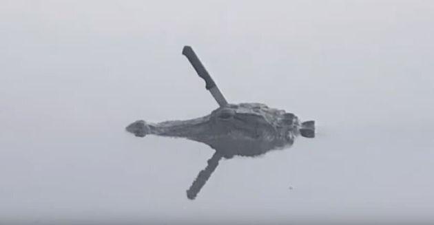 Ο πιο «ζόρικος» αλιγάτορας: Κολυμπά με μαχαίρι καρφωμένο στο κεφάλι