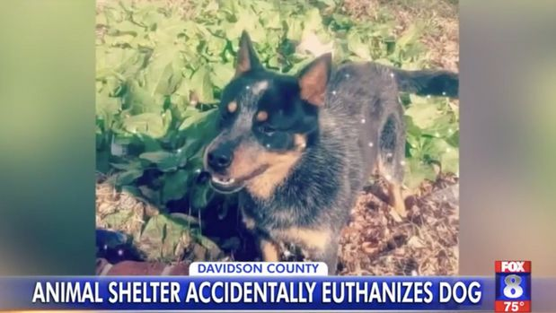 dog accidentally euthanized