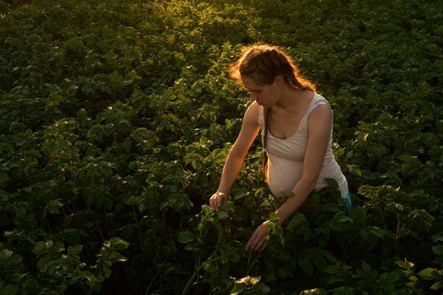 Les agricultrices ont désormais droit au même congé maternité que les autres femmes