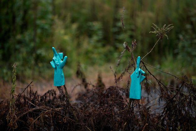 Ραδιενεργή ερημιά: Εικόνες από την απαγορευμένη ζώνη της