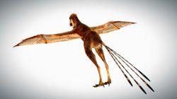 「飛ぶ恐竜」中国で新種発見。モモンガやムササビのように滑空飛行か?