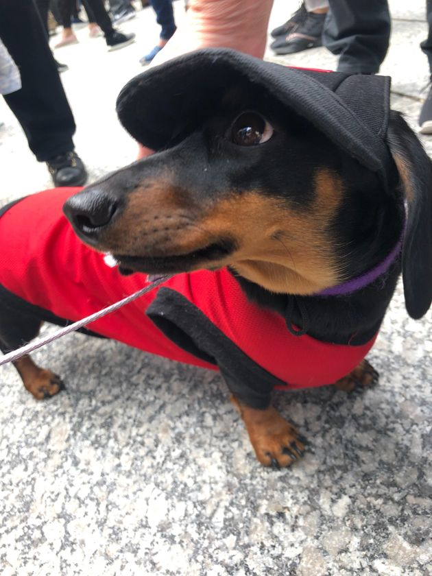 This is Boo, although his owner told HuffPost Canada that we can refer to him as