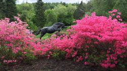 Un impressionnant jardin privé vous ouvre ses portes pour une bonne