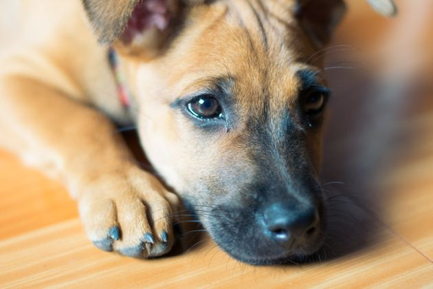 Puppy Dog Eyes Are A Real Thing, Say Scientists – As These 21 Adorable Pooches