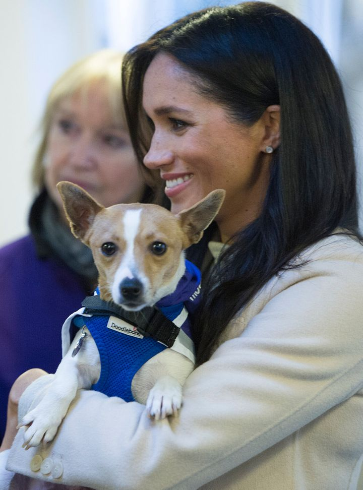 "Meghan, Duchess of Sussex meets a Jack Russell dog named ""Minnie"" during her visit to the animal welfare charity Mayhew in Lo"