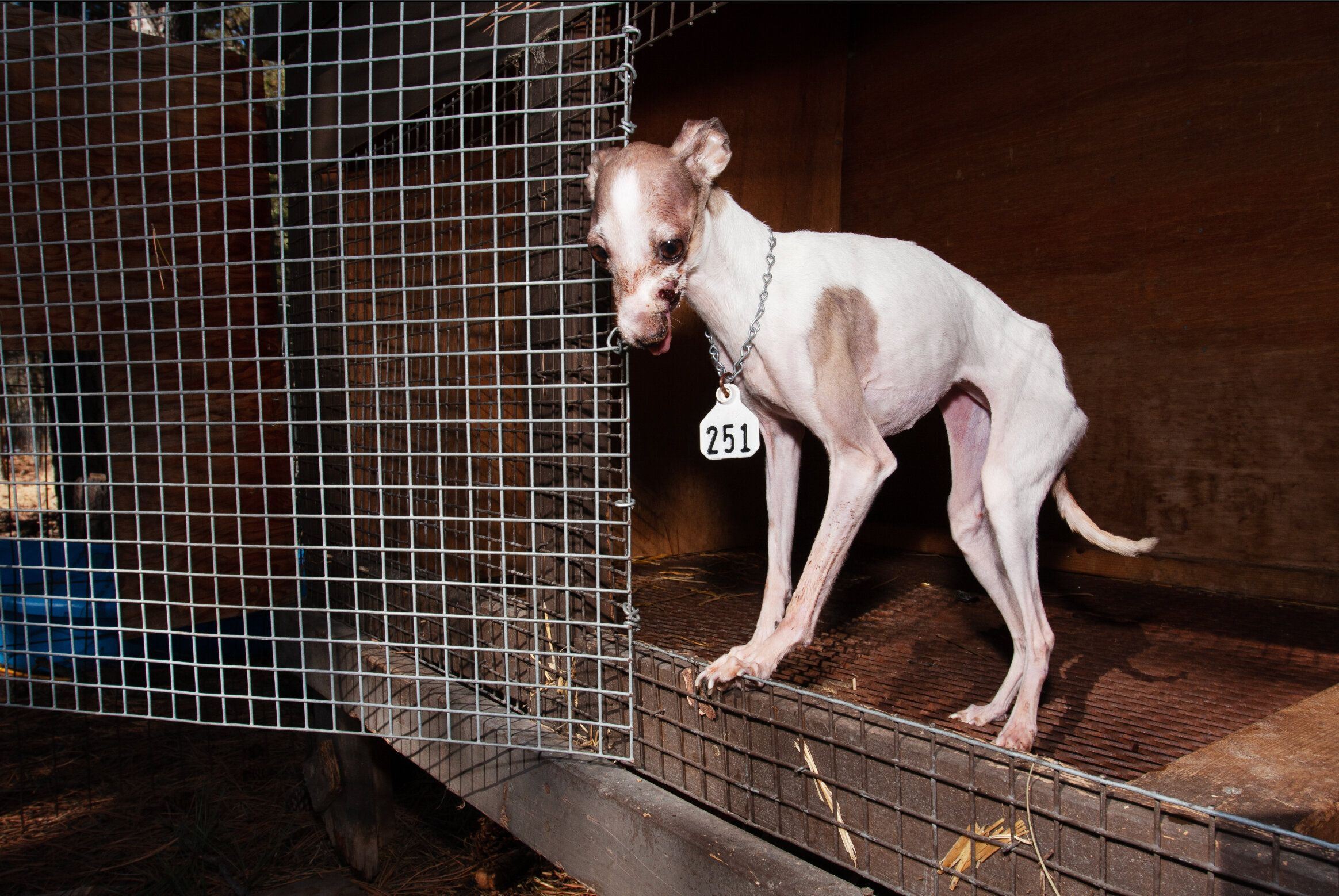 When 'Puppy Mill Rescue' Blurs The Line Between Saving And