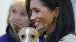 Meghan Markle Talks About The Joy Of Adopting Animals In Sweet