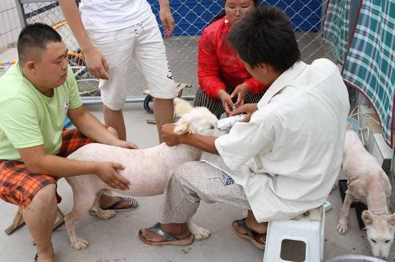 Yulin 2016 - What