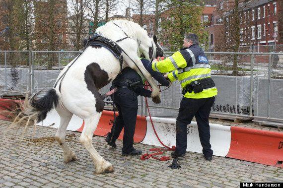 Smithfield Horse Market: Garda Police Tackled By Stallion