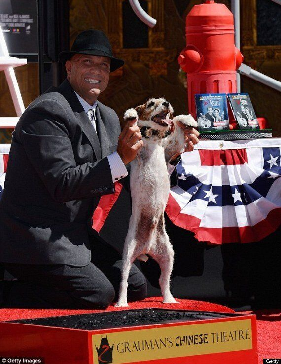 WATCH: The Artist Star Uggie Gets His Pawprint On Hollywood's Walk Of Fame